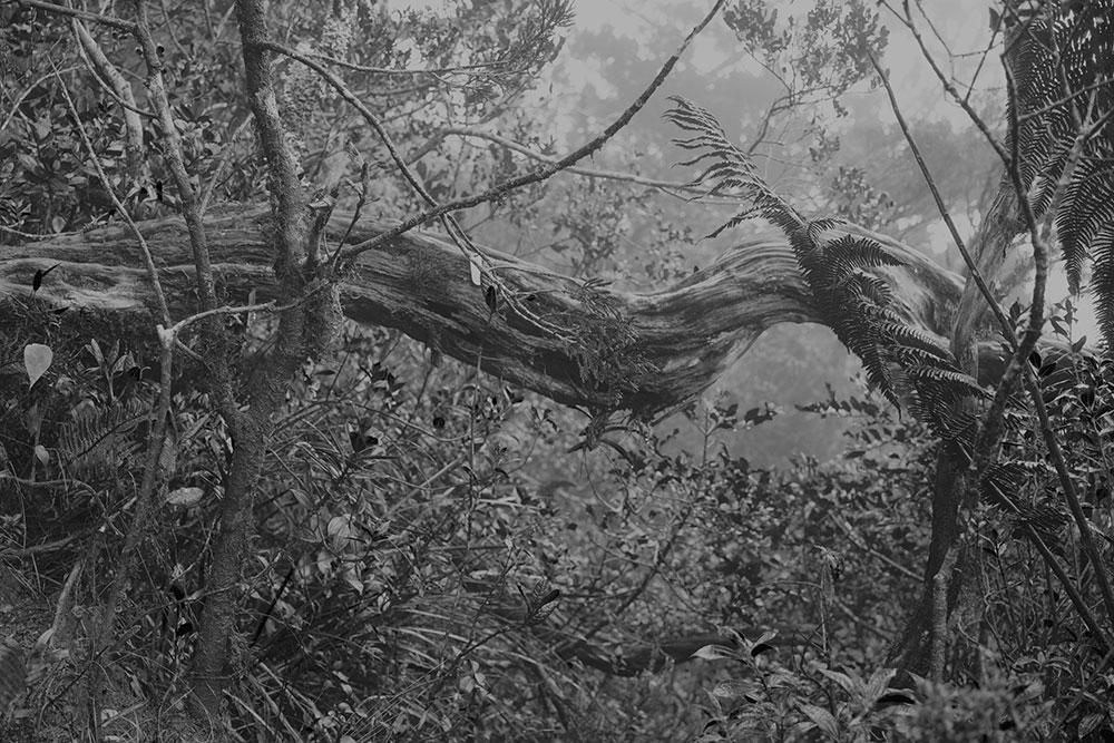 Mikio Hasui Forest 1