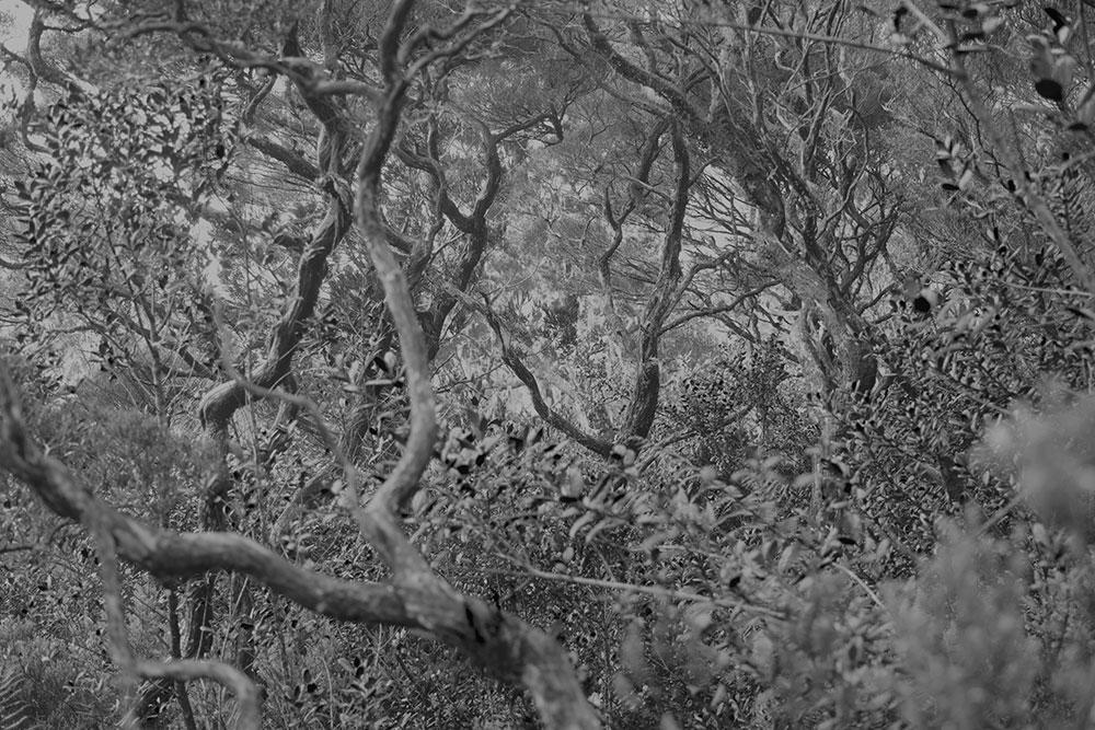 Mikio Hasui Forest 2